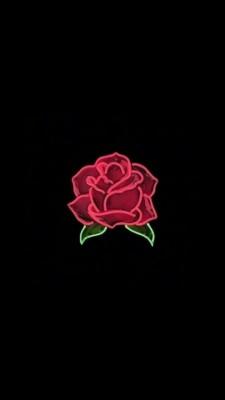Red Rose Red Rose Wallpaper Iphone 1080x1920 Wallpaper Teahub Io