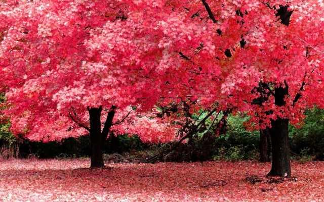 10 105783 full hd nature clipart for pc full screen