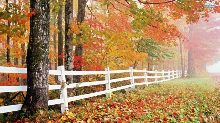 108 1082294 nature wallpaper autumn free 1 desktop wallpapers hd