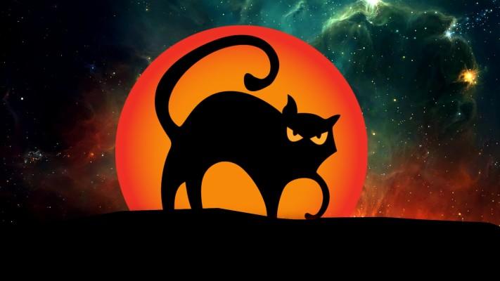Halloween Black Cat Desktop Hd Wallpaper Black Cat Hd 1920x1080 Wallpaper Teahub Io