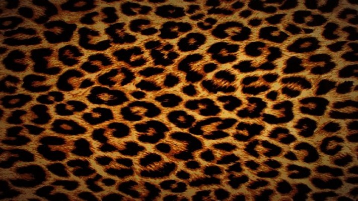 Animal High Definition Wallpapers Free Download - High ...