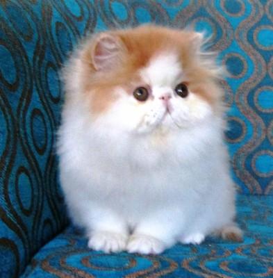 Gambar Gambar Kucing Foto Kucing Lucu Wallpaper Kucing Cat Headphones 1600x1000 Wallpaper Teahub Io