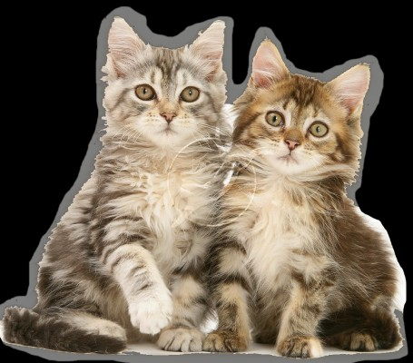 143 1434833 kucing imut png