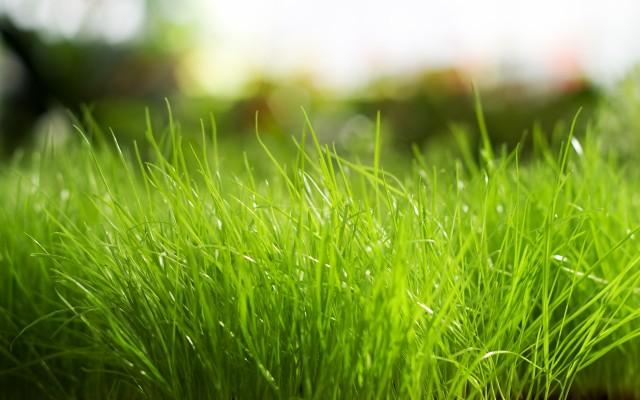 green grass hd wallpaper download 1920x1080 wallpaper teahub io green grass hd wallpaper download