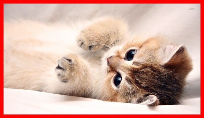 Download Cat Wallpapers And Backgrounds Teahub Io