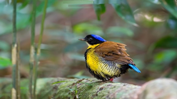 Pictures Of Beautiful Birds Hd Wallpapers Free Download Duck 1920x1080 Wallpaper Teahub Io