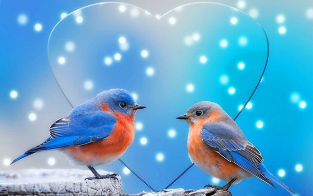 Love Birds Images Download 2560x1600 Wallpaper Teahub Io