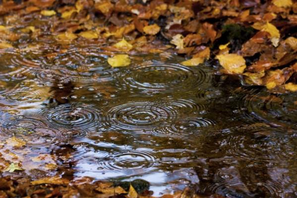 19 192778 autumn rain wallpaper hd