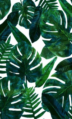 Tropical Leaves Wallpaper Tropical Leaves Wallpaper Hd 700x1149 Wallpaper Teahub Io Island wallpapers could be a marvelous extra into your desktop pc. tropical leaves wallpaper hd