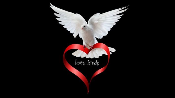 Lovely Dove Bird Pigeon 2560x1440 Wallpaper Teahub Io