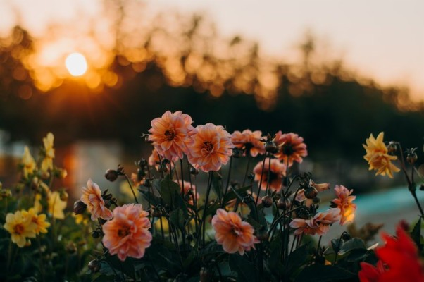203 2034689 aesthetic flower background landscape