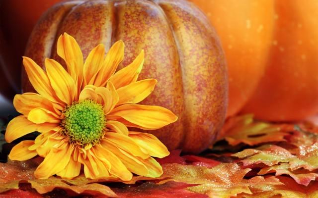 205 2059489 desktop wallpaper beautiful fall flowers pumpkin and fall