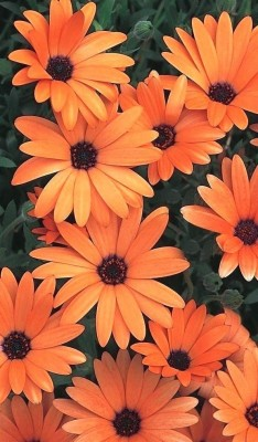 208 2084791 flowers iphone wallpaper beautiful orange flowers wallpaper aesthetic
