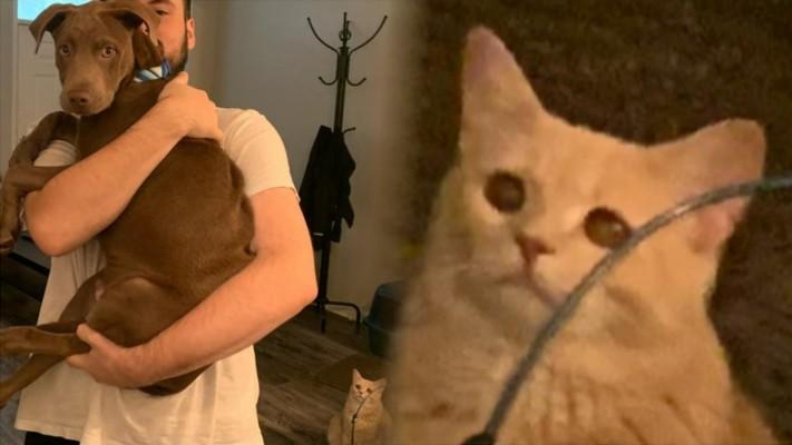 My Cat Wallpapers - Cat Sad Hd - 1280x804 Wallpaper ...