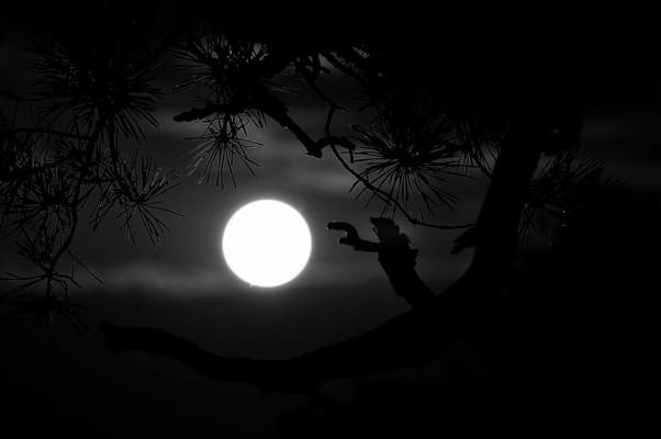 Dark Night Black Moon Fullmoon Tree Nature Silhouette 910x604 Wallpaper Teahub Io