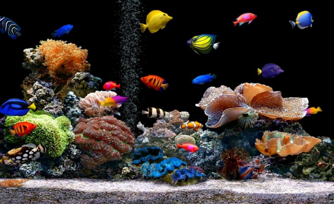 22 223073 free download live hd wallpaper fish aquarium 3d