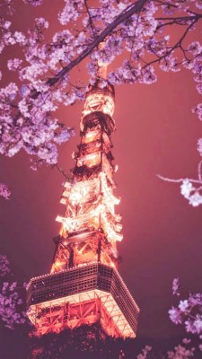 Cherry Blossom Iphone Wallpaper Anime 540x960 Wallpaper Teahub Io