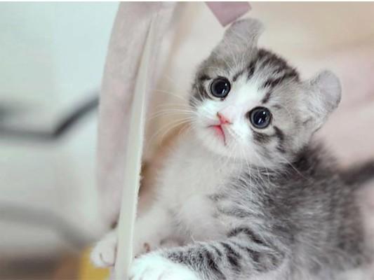 Wallpaper Kucing Lucu صور قطط مكتوب عليها 800x600 Wallpaper Teahub Io