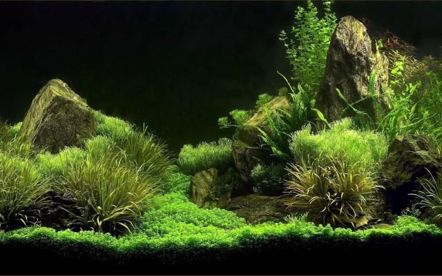 Amazing Aquascape Wallpaper Aquascape Wallpaper 4k 1096x599 Wallpaper Teahub Io