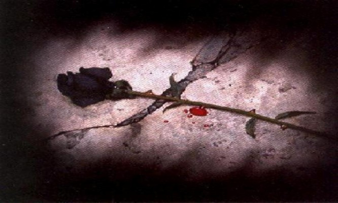 249 2495575 black rose heart broken