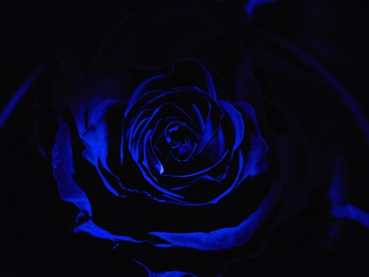 Wallpaper Rose Neon Dark Background Neon Flower With Black Background 1920x1080 Wallpaper Teahub Io