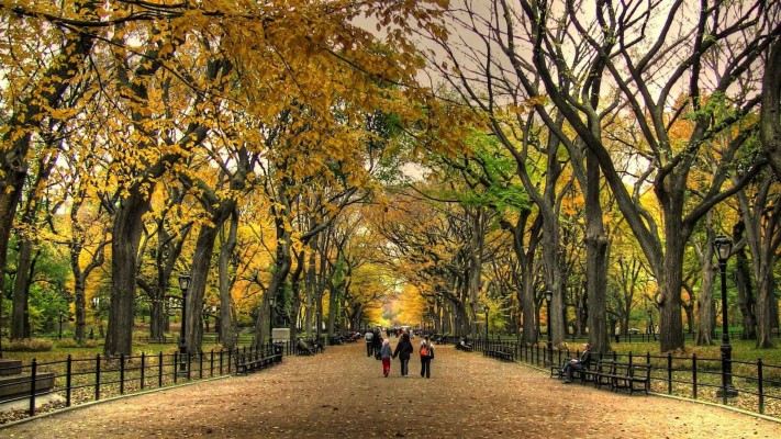 Fall Iphone Backgrounds Central Park 900x600 Wallpaper Teahub Io