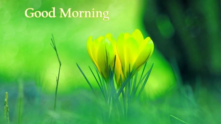 Whatsapp Cute Good Morning 1200x675 Wallpaper Teahub Io