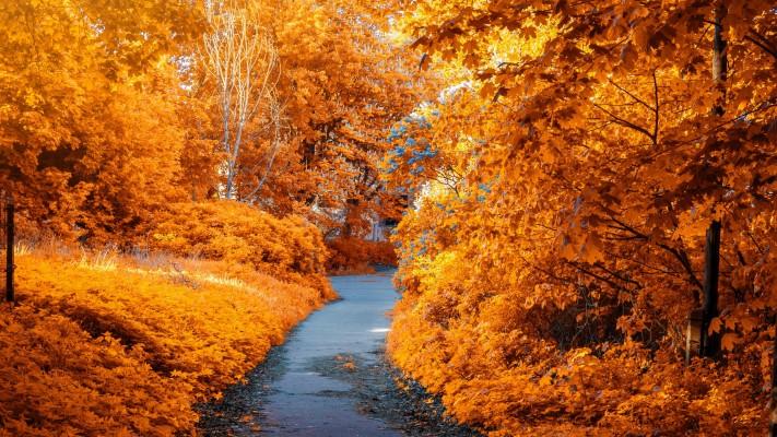 Autumn Wallpaper 4k 3840x2160 Wallpaper Teahub Io