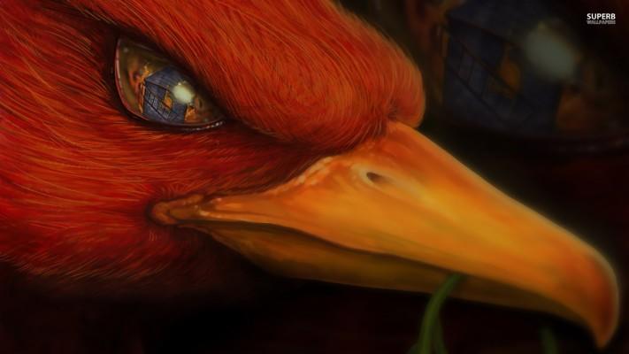 Phoenix Head Fantasy Phoenix Bird Desktop Hd Stores 1920x1080 Wallpaper Teahub Io