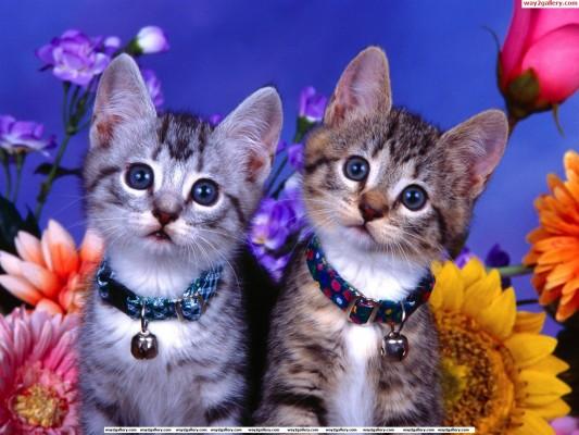 Gambar Kucing Sad godean.web.id