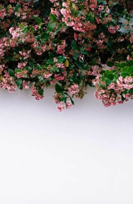 Aesthetic Coraline Wallpaper Iphone 750x1334 Wallpaper Teahub Io