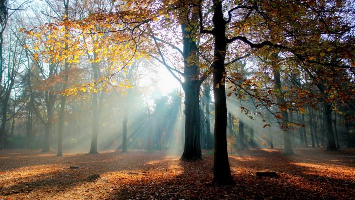 Bilder herbst kostenlos whatsapp Bilder Herbst
