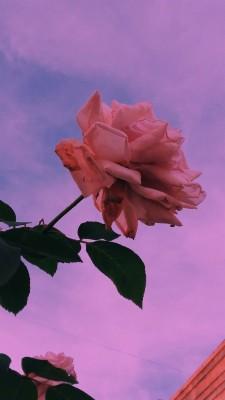 323 3237280 rose gold aesthetic cute
