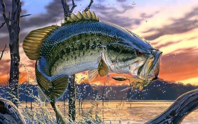 Bass Fishing Wallpaper 640x1136 Wallpaper Teahub Io