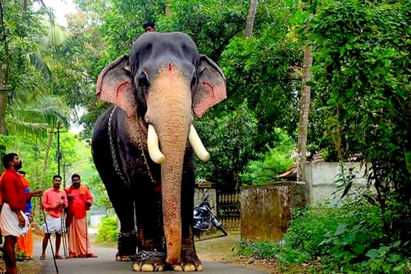 Kerala Elephant Blowing Water - 960x640 Wallpaper - teahub.io
