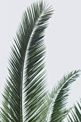Palm Leaves Wallpaper Iphone 750x1333 Wallpaper Teahub Io Background daun, pattern background with exotic tropical leaves. palm leaves wallpaper iphone 750x1333