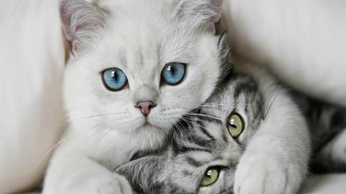 4 47690 funny cat desktop wallpapers 1366768 sen sus desktop