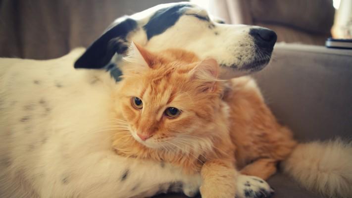 Cat Dog Love Each Other 1152x864 Wallpaper Teahub Io