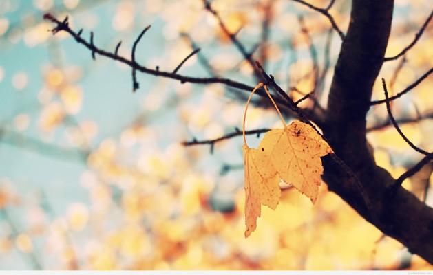Fall Wallpaper Tumblr Macbook 1000x625 Wallpaper Teahub Io