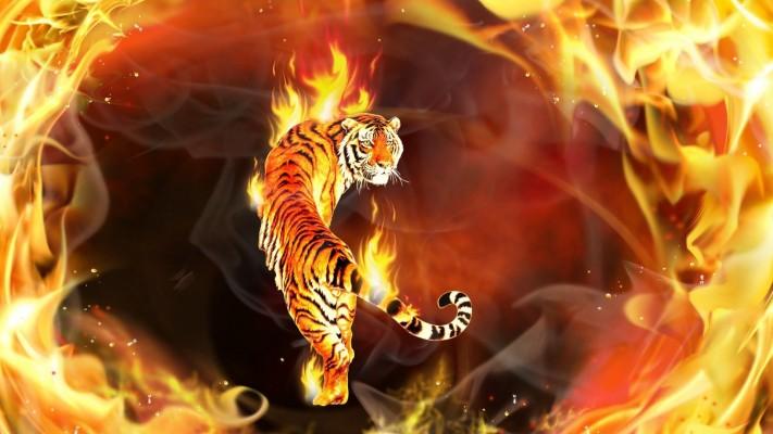 Fire Tiger Wallpaper Hd 1920x1080 Wallpaper Teahub Io