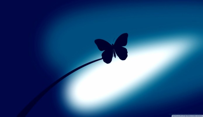 Butterfly 4k Wallpaper Download 3840x2160 Wallpaper Teahub Io