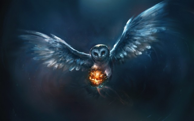 Download Owl Wallpapers And Backgrounds Teahub Io