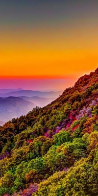 Mountain Colorful Forest Nature Sunset Scenery Colorful Wallpaper Iphone 11 1080x2160 Wallpaper Teahub Io
