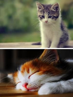 Stress Relief Cat Pet Quotes 600x800 Wallpaper Teahub Io