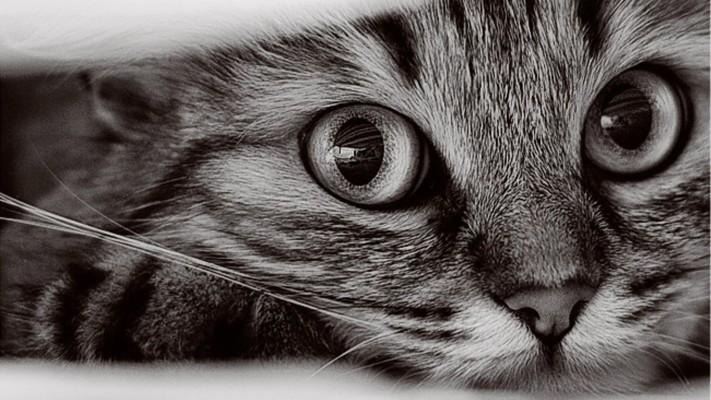 Cat Wallpaper Hd For Laptop 1920x1080 Wallpaper Teahub Io