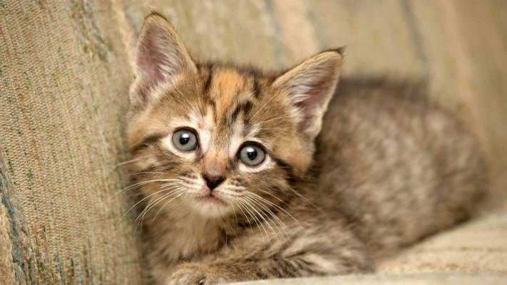 Image result for adorable fluffy kitten
