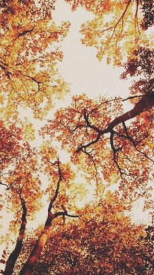 67 671736 fall wallpaper tumblr iphone 6