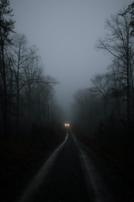 Dark Forest Wallpapers For Android 1280p Width 240 1280x1920 Wallpaper Teahub Io
