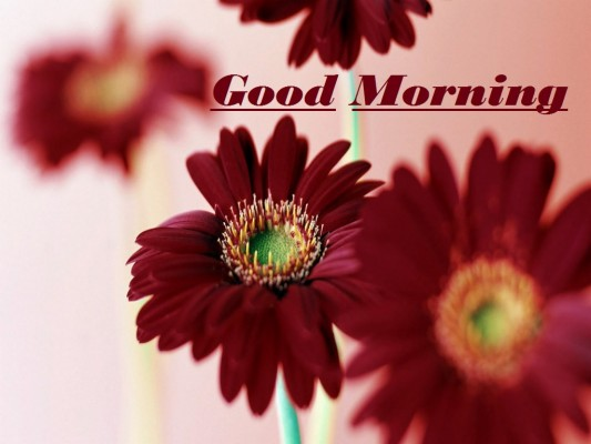 Good Morning Hd Wallpaper Flowers Good Morning Hd 1024x768 Wallpaper Teahub Io