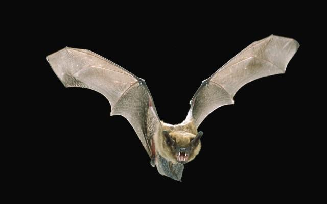 Bat Computer Background For Desktop - Bat Desktop ...